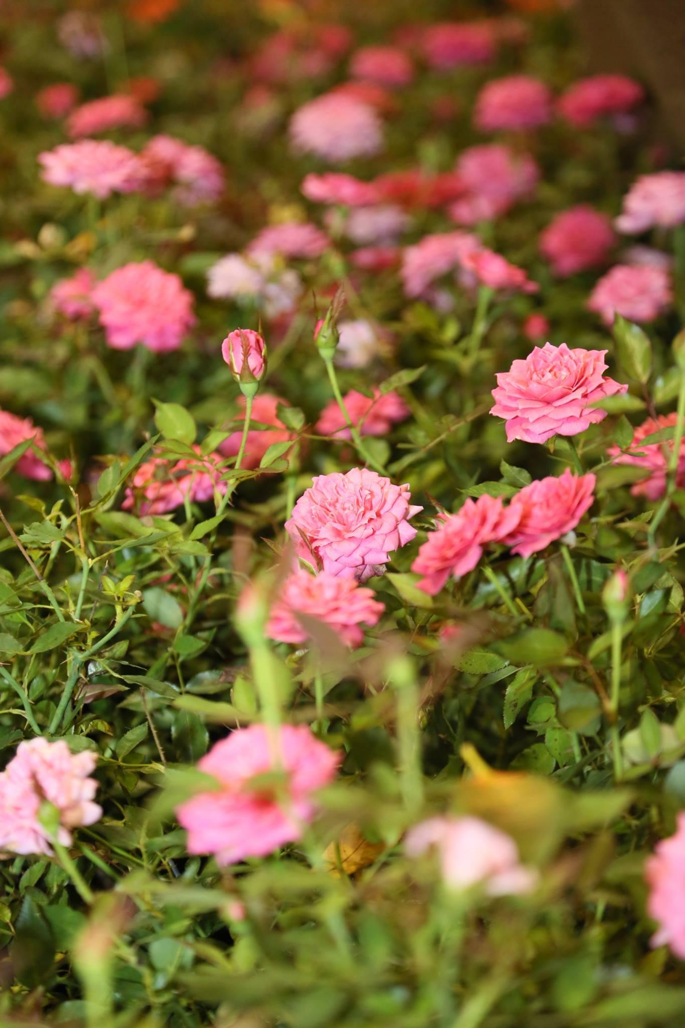 FNGLA_Landscape_flowers