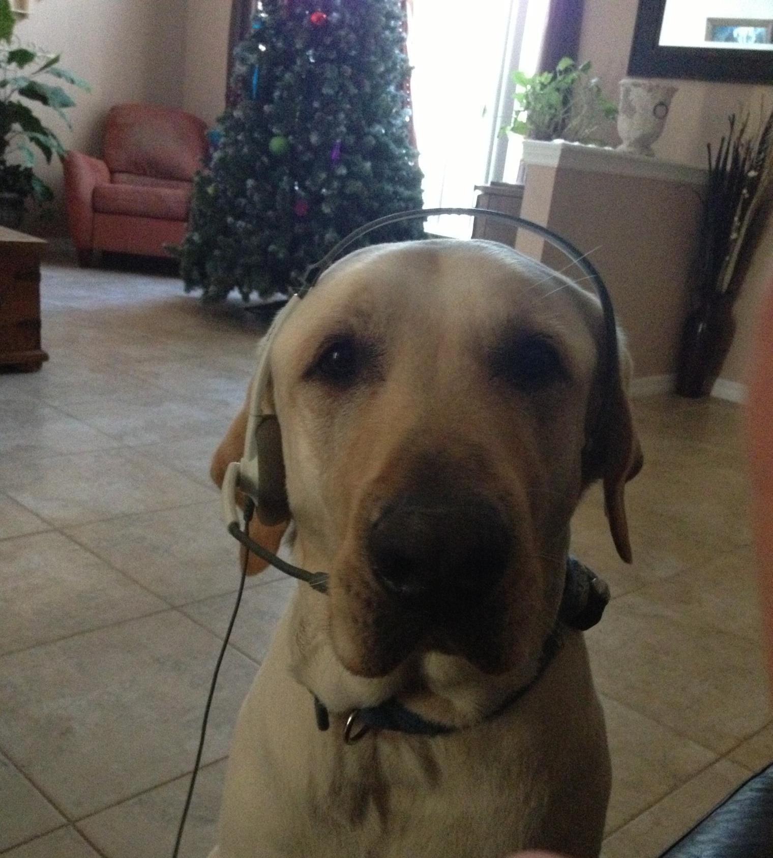 Moose_SprayerDepot_Dogs.jpg