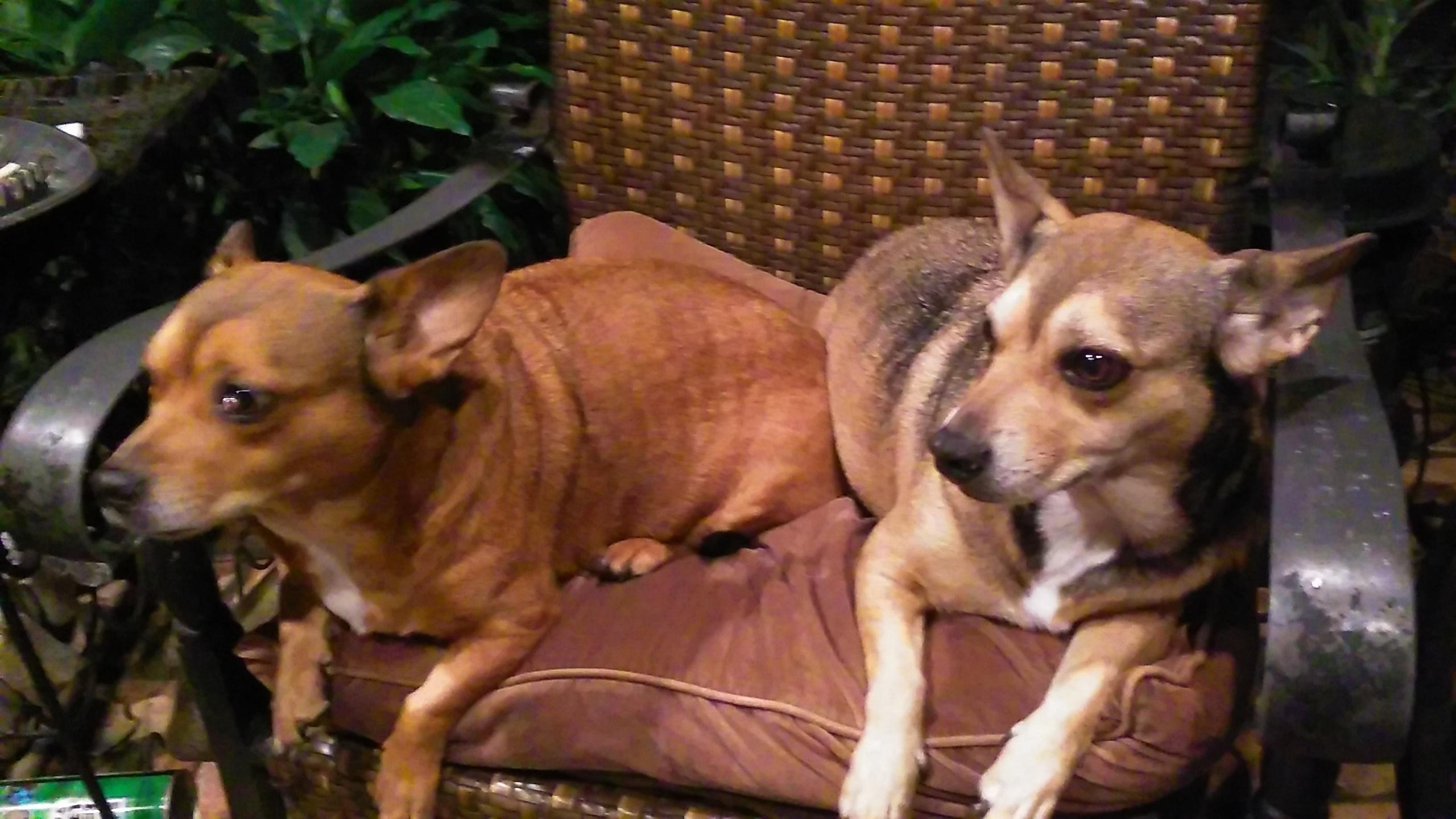 Thelmaandlouise_SprayerDepot_Dogs.jpg