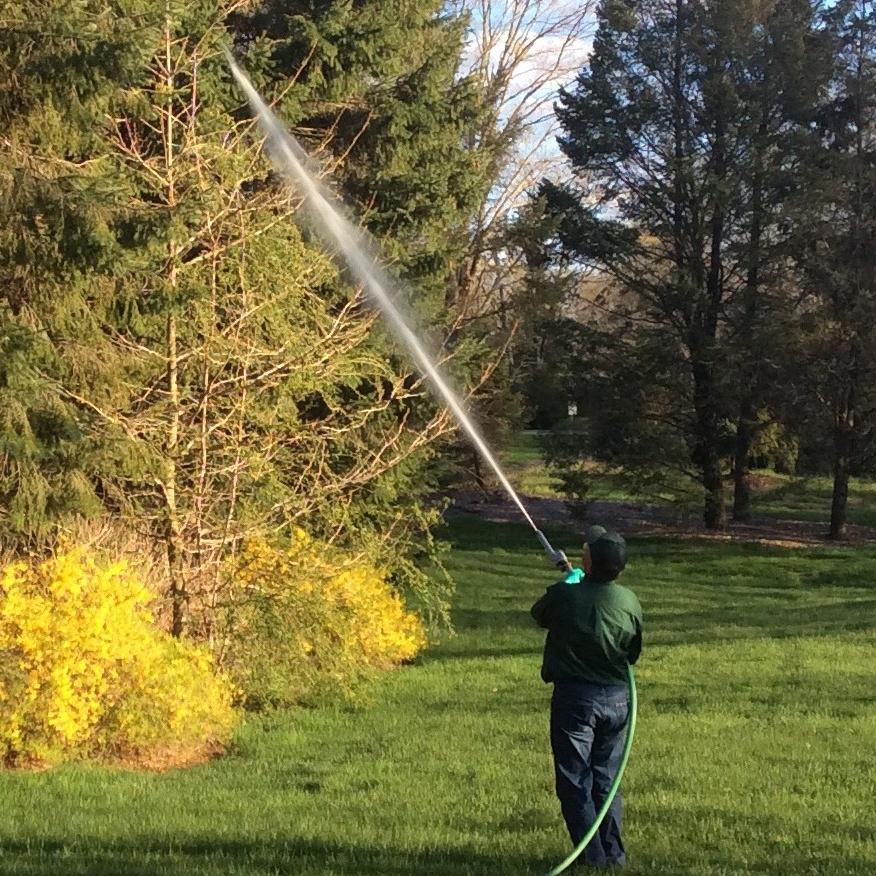 Spraying_trees.jpg