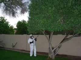 tree-spraying-1.jpg