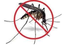 home-mosquito-control