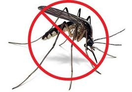 home-mosquito-control